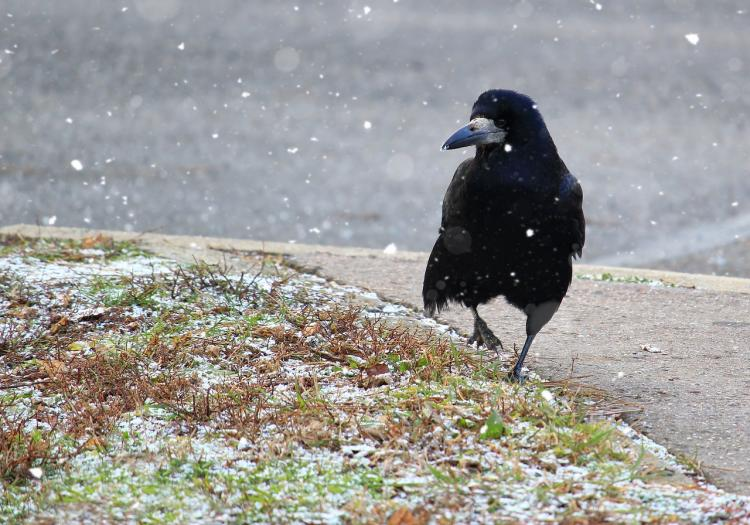 Умнейшие создания: приморцы обсуждают зимние забавы пернатых