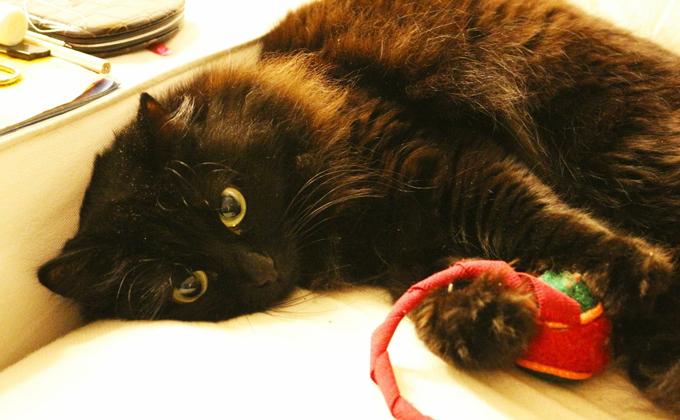 Главную опасность для кошек на Новый год назвал ветеринар