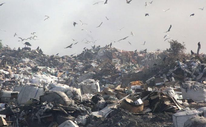 Перенести мусорный полигон подальше от Бердска попросили губернатора
