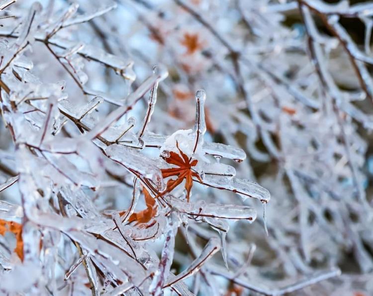 «Всё оттает, и мы откроемся»: ботанический сад в Приморье после непогоды