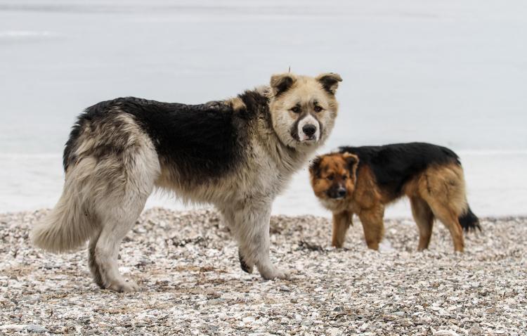 «Каково это – быть бездомным псом»: психология собак на приморских улицах