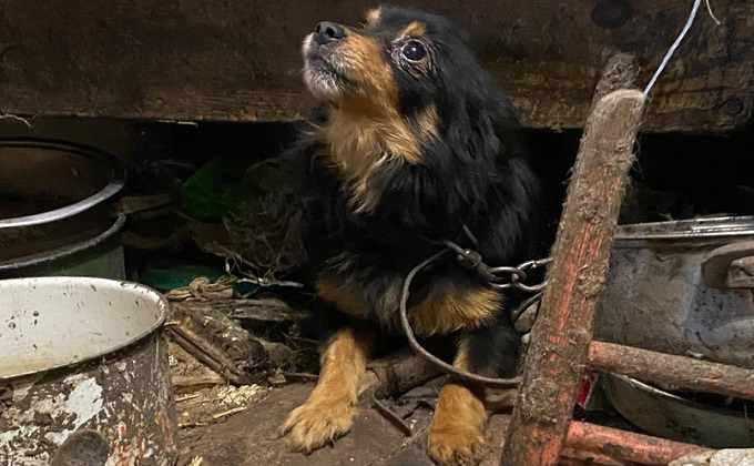 Концлагерь для собак и кошек обнаружен под Новосибирском