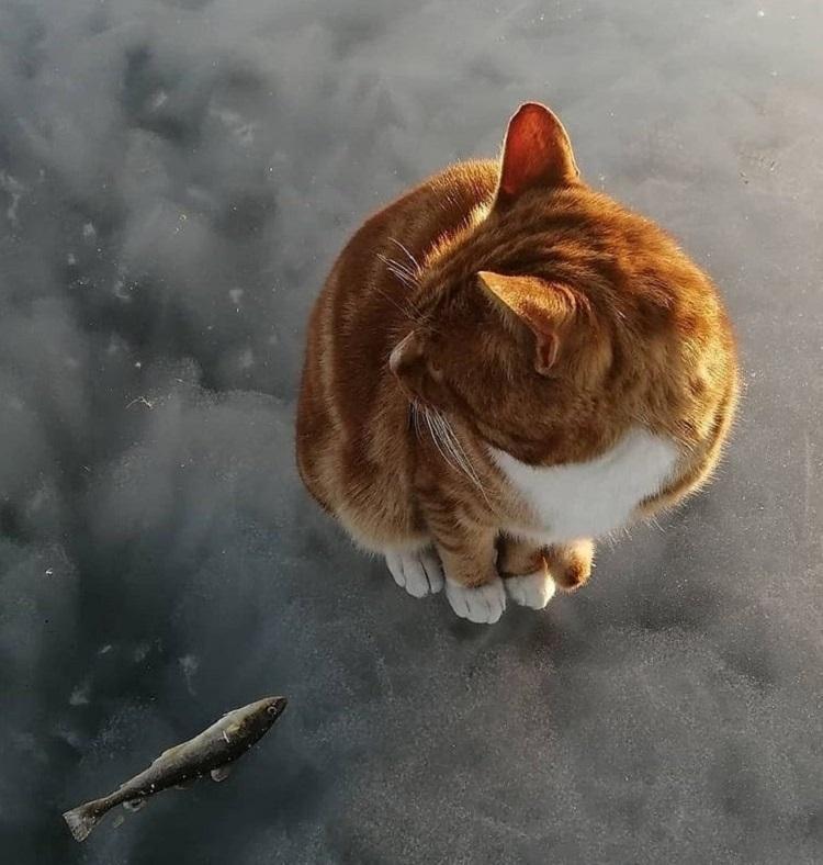 Можно смотреть бесконечно: усатый рыжий приморец на зимней рыбалке