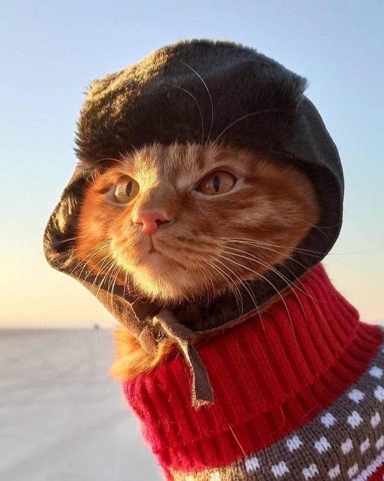 Усатый и в ушанке: фото приморского кота на зимней рыбалке взорвали сеть