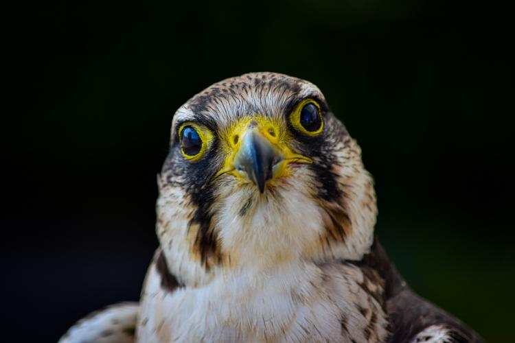 Настоящий приморский охотник: жители края запечатлели пернатого красавца