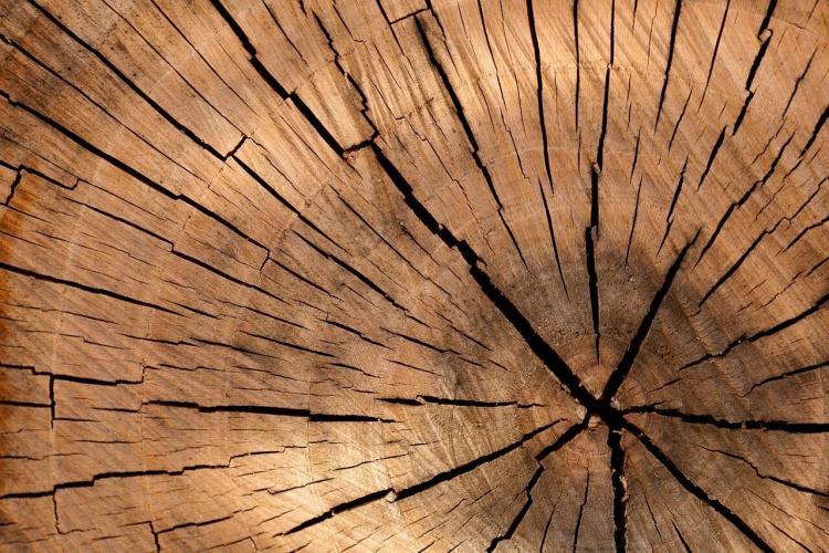Десятки тысяч кубометров Приморского леса отправились в Азию