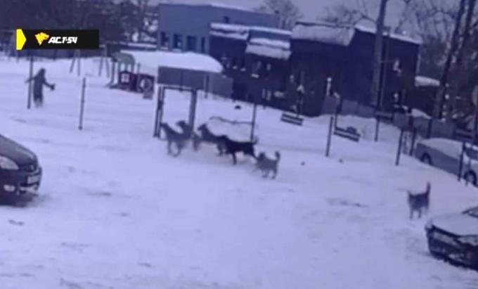 Забор спас ребенка от стаи голодных собак в Новосибирске