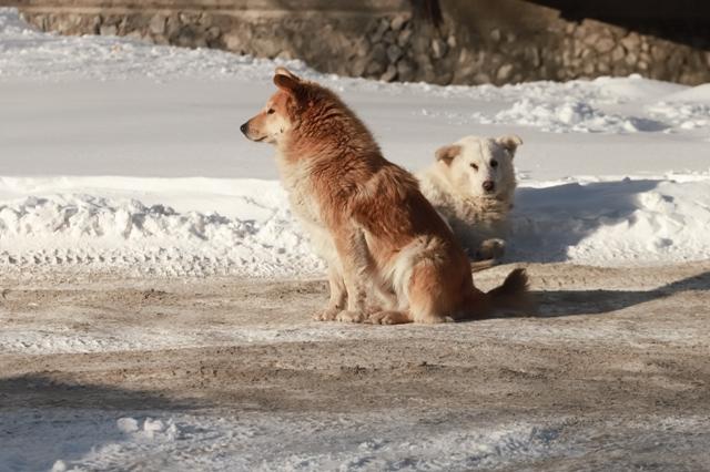 Эвтаназии подвергли более сотни бездомных животных в Новосибирской области