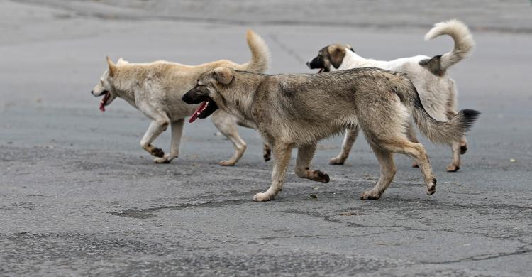 Приморец сбил бездомную собаку и скрылся с места происшествия