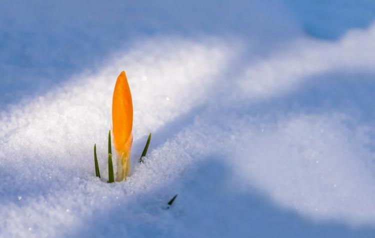 Весна в Приморье начнётся с ночных морозов до -33 °С