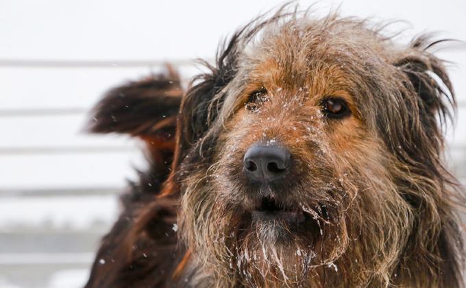 «Все начинается с человека»: мэр Новосибирска о нападениях собак на горожан
