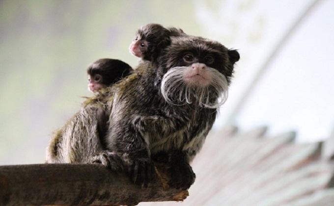 Лучшего отца к 8 Марта выбрали в Новосибирском зоопарке