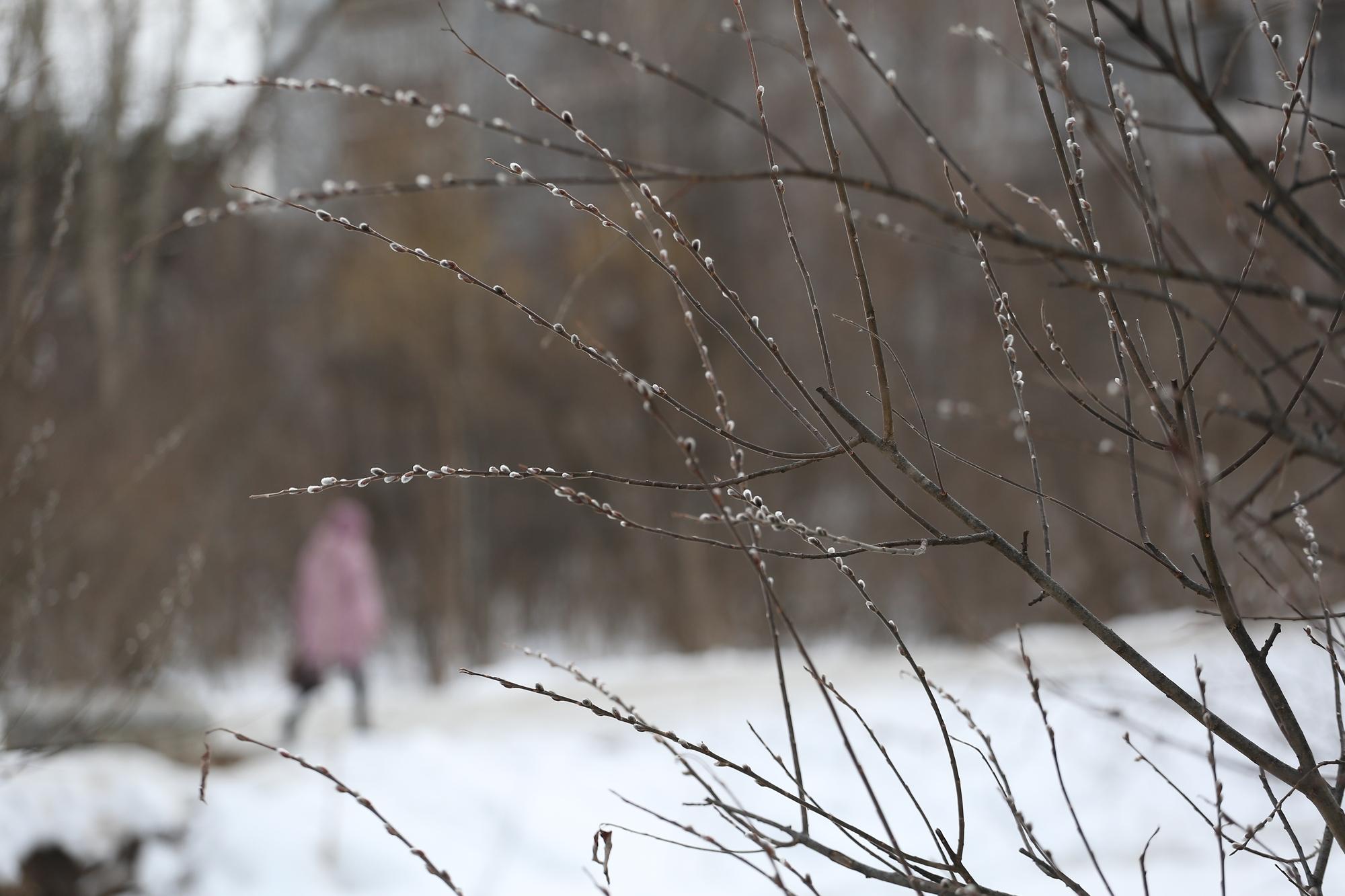 Дождь и мокрый снег обрушатся на Новосибирск в последние выходные марта