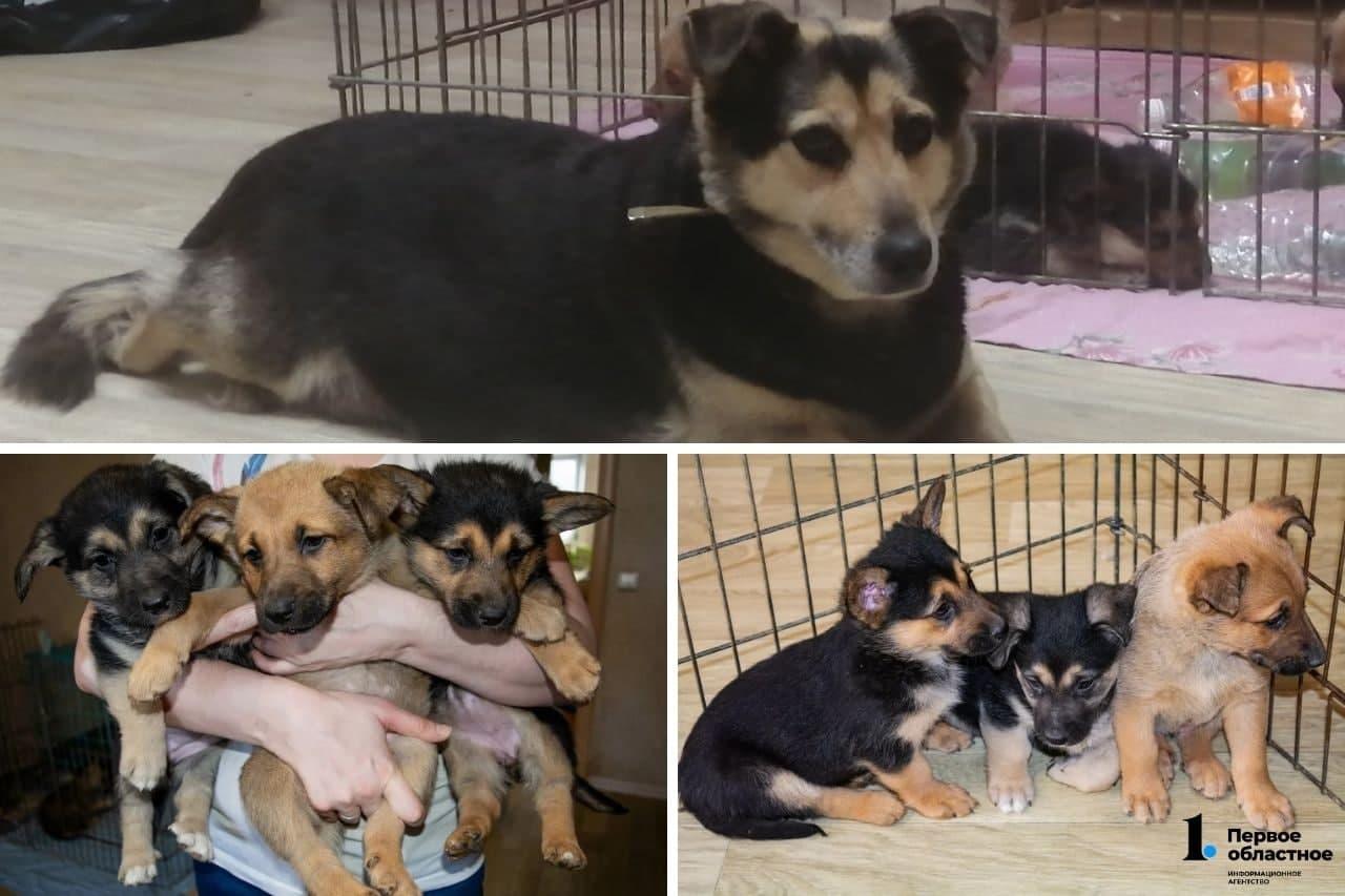 Жительница Трехгорного спасла бездомную собаку и её семерых щенят