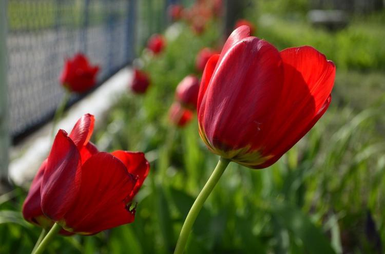 Продажа «праздничных цветов» во Владивостоке будет удобной и законной