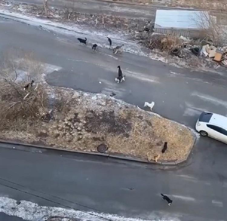 Жителям Чуркина страшно выходить на улицу из-за бездомных собак