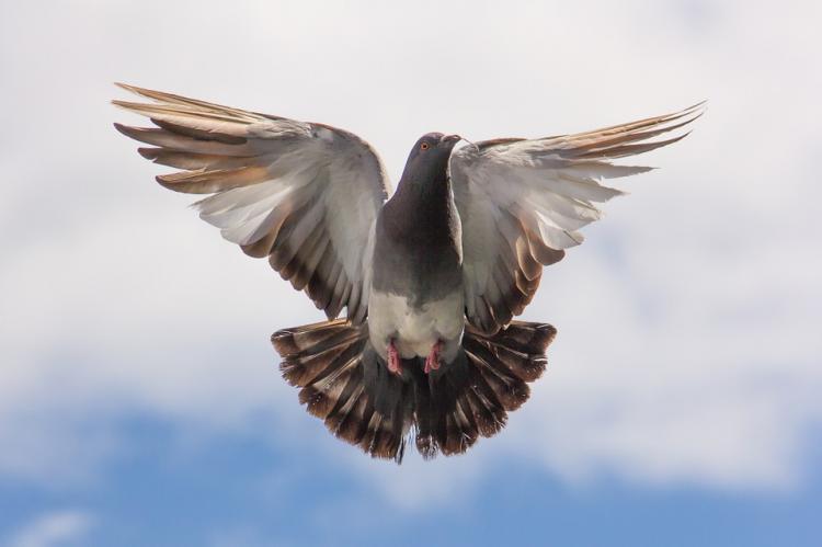 «Готовит шаверму»: приморец сетью ловит голубей на улице