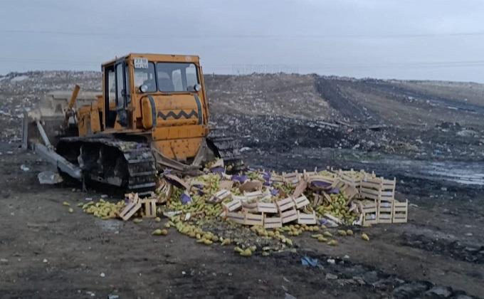 Бульдозер раздавил более 2 тонн груш с маркировкой «PL»