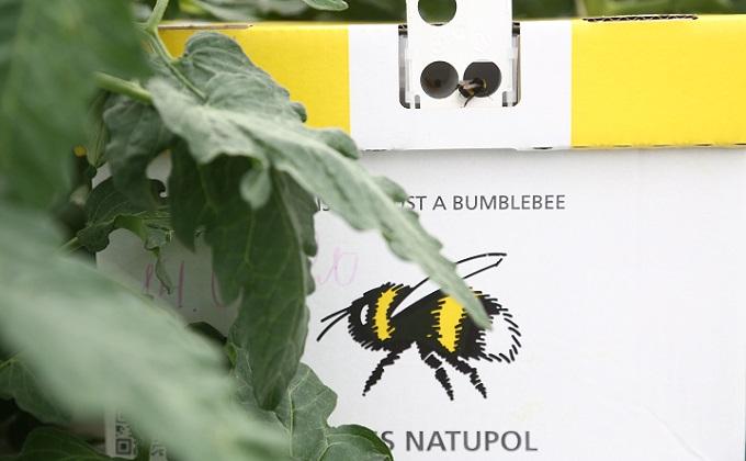Спасать пчёл от массовой гибели решили в Искитимском районе