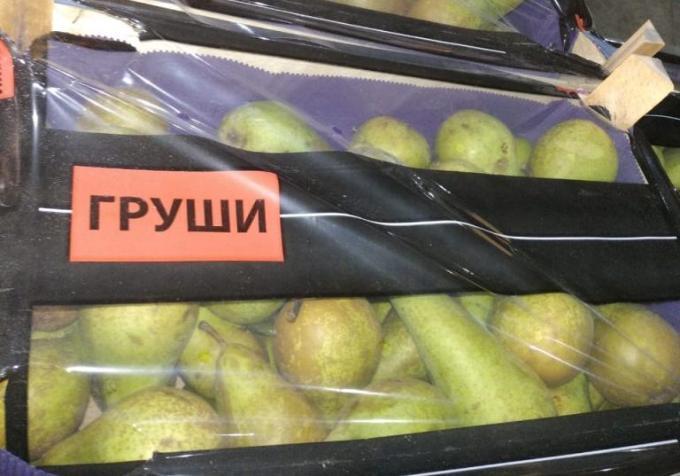 Тонну польских груш раздавили бульдозером в Новосибирске