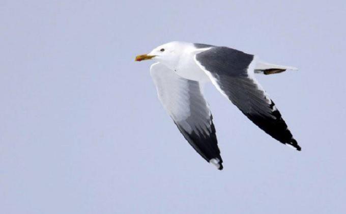 Серебристые чайки с хохотом пролетели над Западным жилмассивом