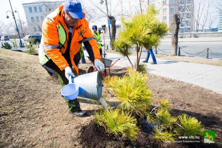 Специалисты рассказали, какие деревья лучше высаживать во Владивостоке
