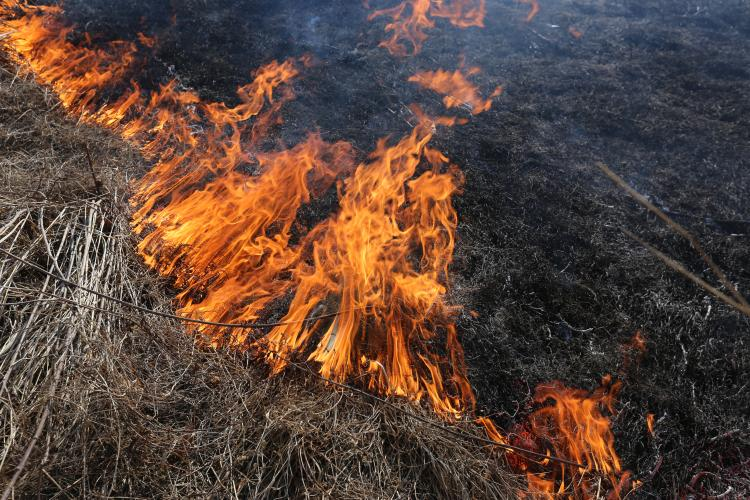 Жителей Владивостока призывают соблюдать правила противопожарного режима
