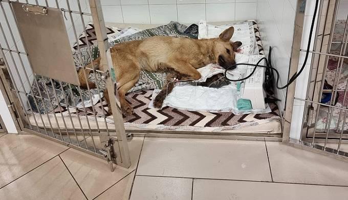Догхантер расстрелял в голову четырех собак в селе Лебедевка