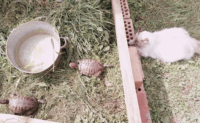 Беглянка Фрося отмечает День черепахи в Болотном