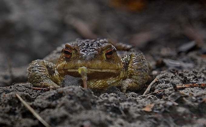 Полчища жаб занимаются любовью в подворотнях Новосибирска