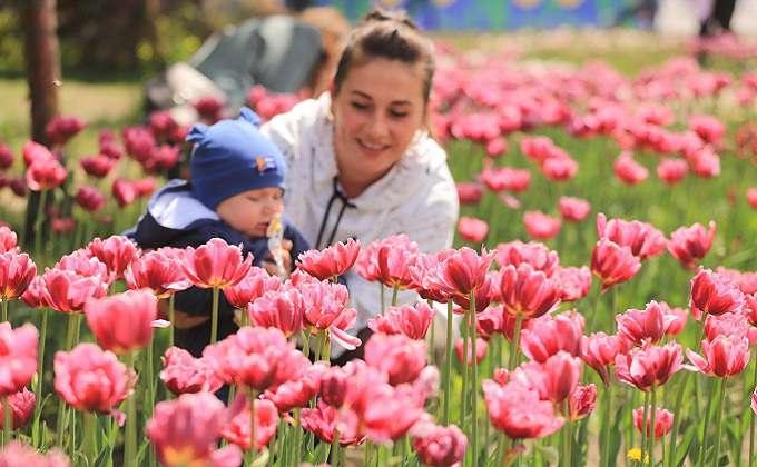 Первый фестиваль цветов начался в Новосибирске