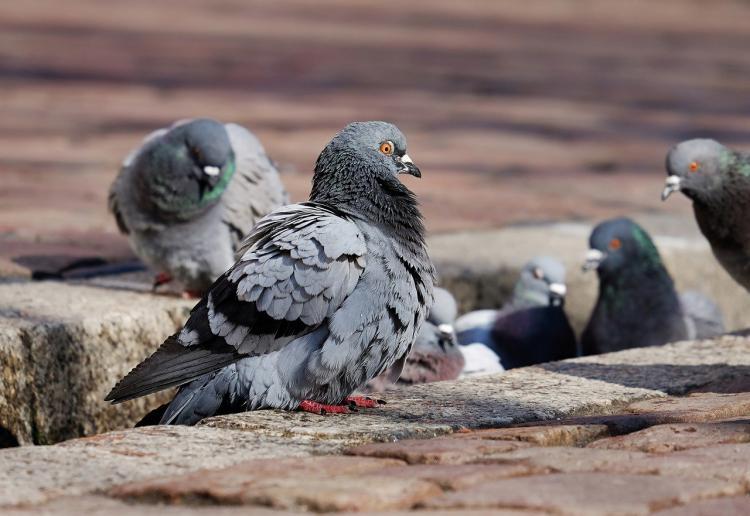 Во Владивостоке неизвестные обкололи голубей иголками от шприцев