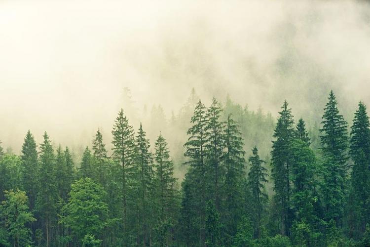 В Приморье обеззаразили лесоматериалы, которые отправляют в Китай