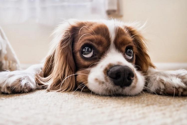 Ученые нашли коронавирус, который распространяют собаки