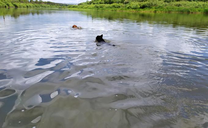 Открыт счет жертвам купального сезона-2021. В озере под Искитимом утонул 26 летний мужчина