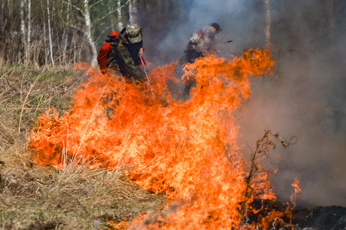 Увидели – погасили: как система мониторинга помогает быстро тушить лесные пожары в Новосибирской области