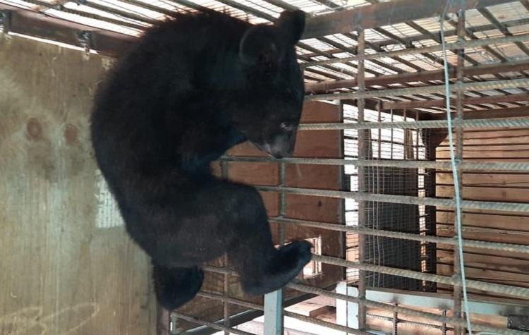 В Приморье у людей изъяли медвежонка