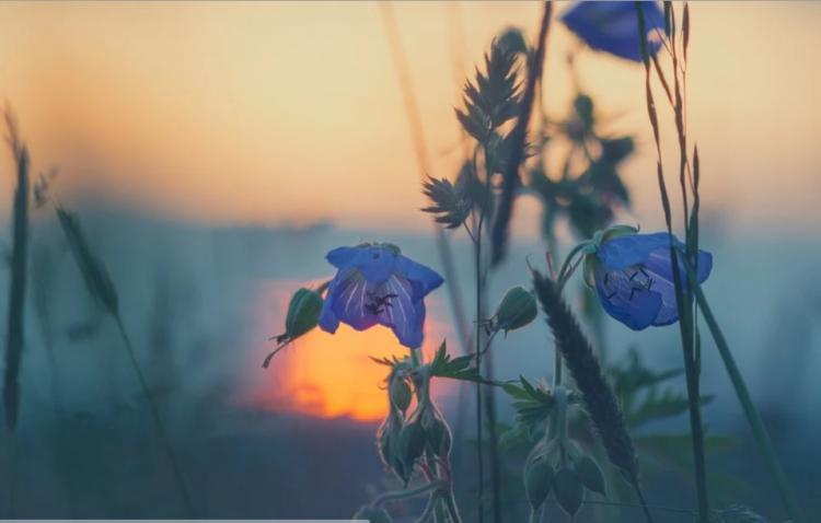 Синоптики рассказали, как завершится июнь в Приморье