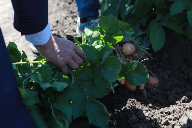 В Приморье собираются привлечь больше молодёжи в сельское хозяйство