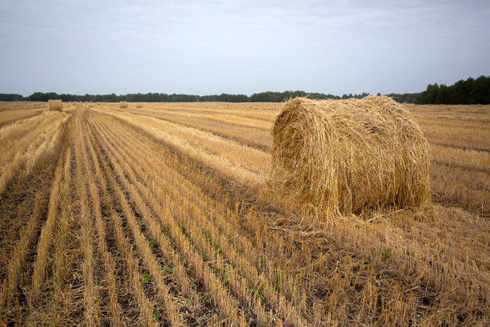 Без сена рискуют остаться крестьяне Куйбышевского района