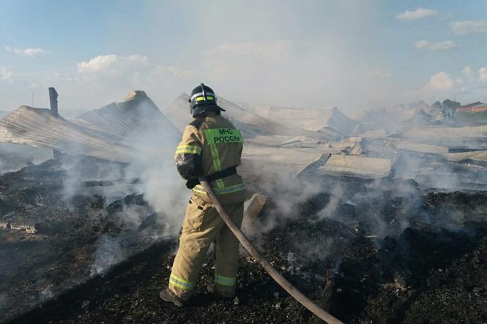 Сорок телят сгорели заживо в селе Павлово Новосибирской области