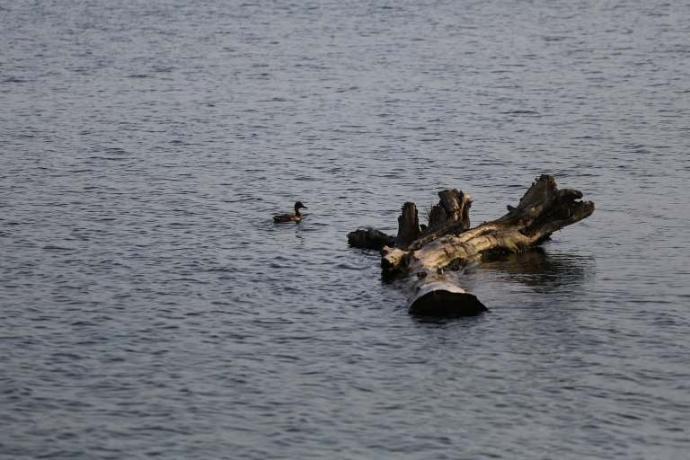 «Это сразу губит все живое»: последствия выброса канализации в Обское море в Новосибирске