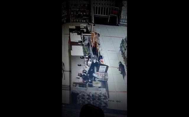 Хвостатый незнакомец сутками тестировал сигнализацию в магазине в Искитиме
