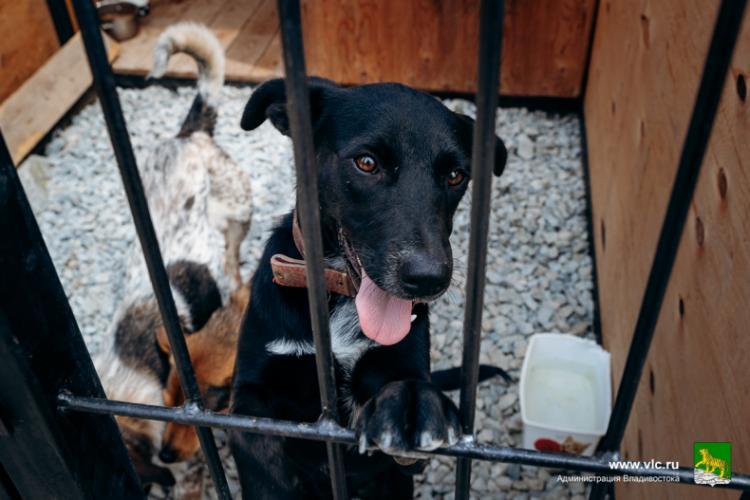 Во Владивостоке отловят бездомных собак
