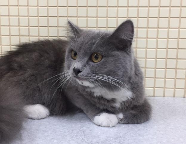Дети спасли кошку и нашли ее владельцев в Новосибирске