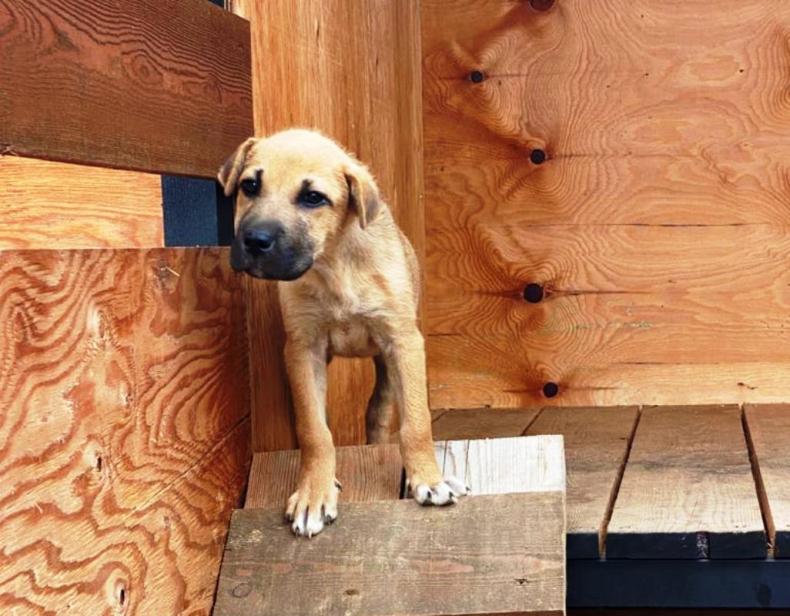 Собаки, отловленные на улицах Владивостока, ищут новых хозяев