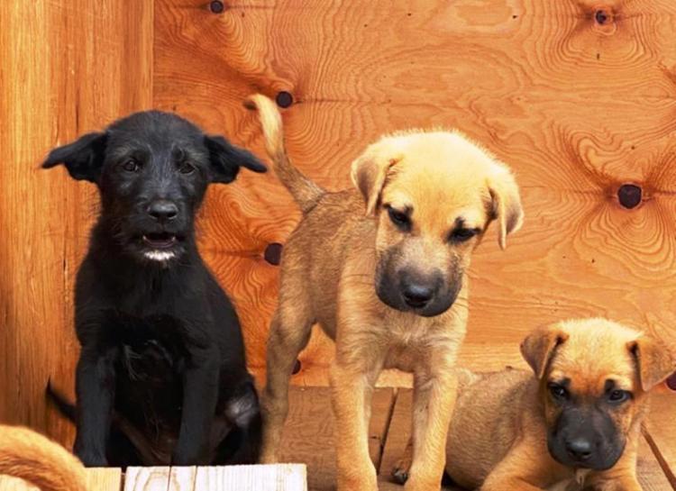 «Хочу домой»: собаки, отловленные на улицах Владивостока, ищут новых хозяев