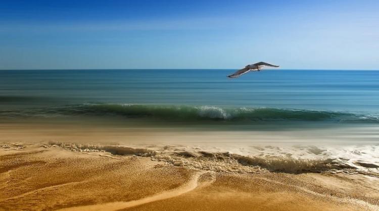 «Местный олигарх»: фото с популярного пляжа Приморья обсуждают в сети
