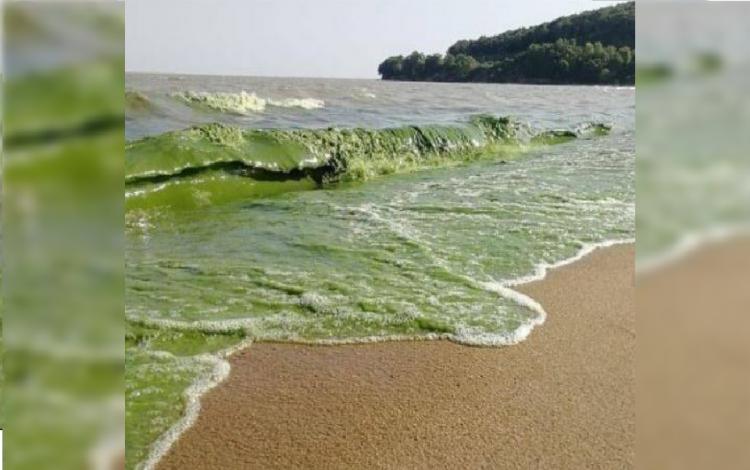 «Искупаешься и станешь Халком»: озеро Ханка изменилось в Приморье