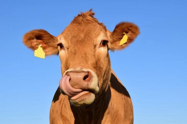 В Приморье не допустили ввоз говяжьей печени из Аргентины